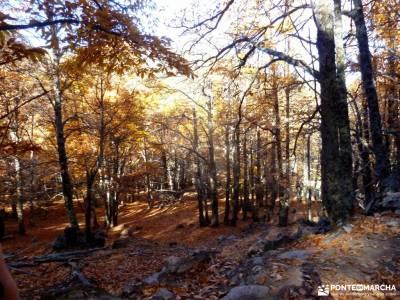 Castañar de El Tiemblo;Ávila; senderismo en madrid federacion española montaña nacimiento del ri
